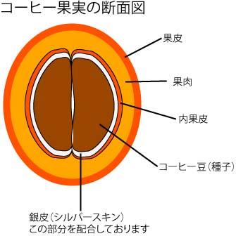 カフェナプキン(シルバースキン配合